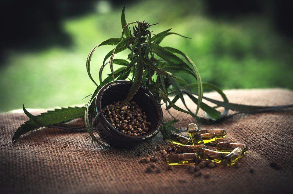 Hanföl – das goldene Öl der Cannabispflanze